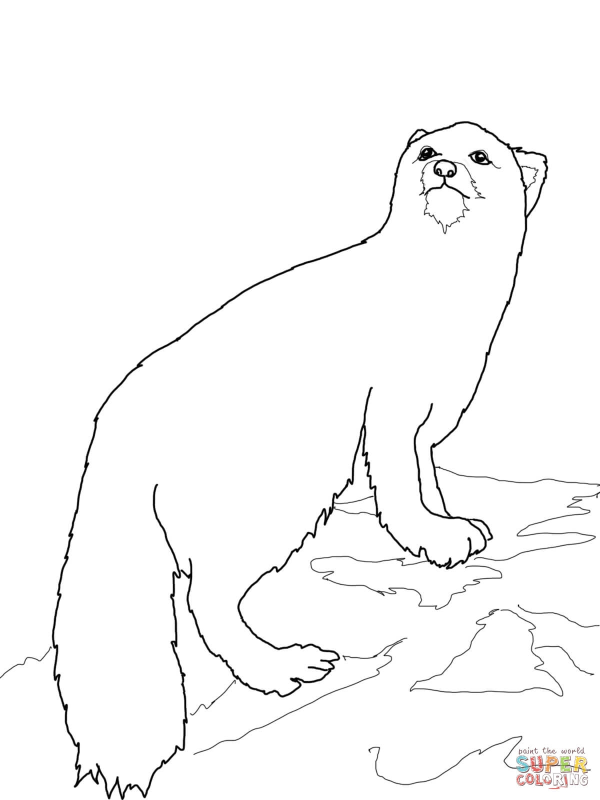 1200x1600 Arctic Fox Coloring Page To Print