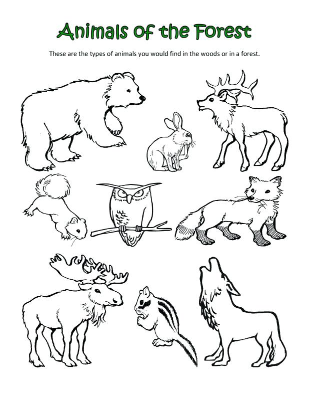 618x800 Polar Animals Coloring Pages Polar Animals Coloring Pages Arctic
