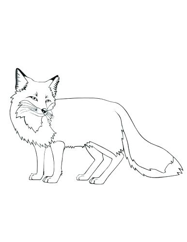 386x500 Arctic Fox Coloring Page Professional