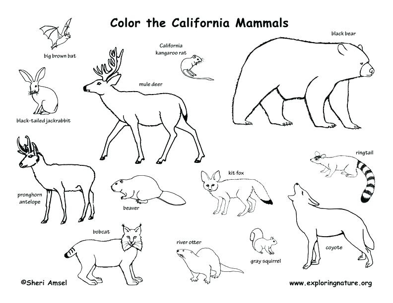 792x612 Polar Animals Coloring Pages