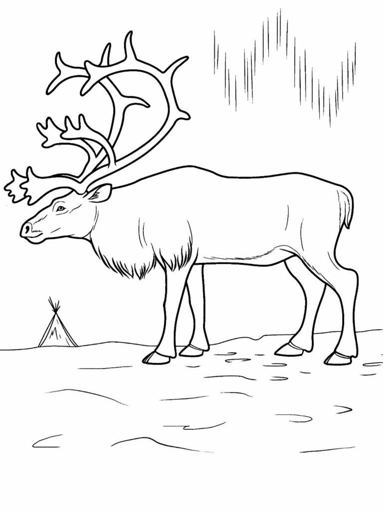 768x1024 Arctic Animal Coloring Pages Deeptown Club