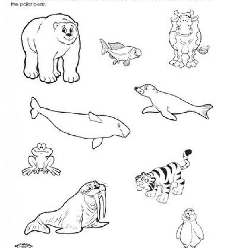 802x864 Arctic Animals Coloring Pages Adult General For Preschoolers Free