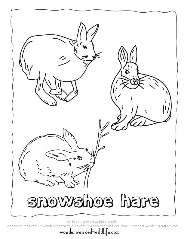 612x792 Arctic Animal Coloring Pages Polar Animals Coloring Pages Polar