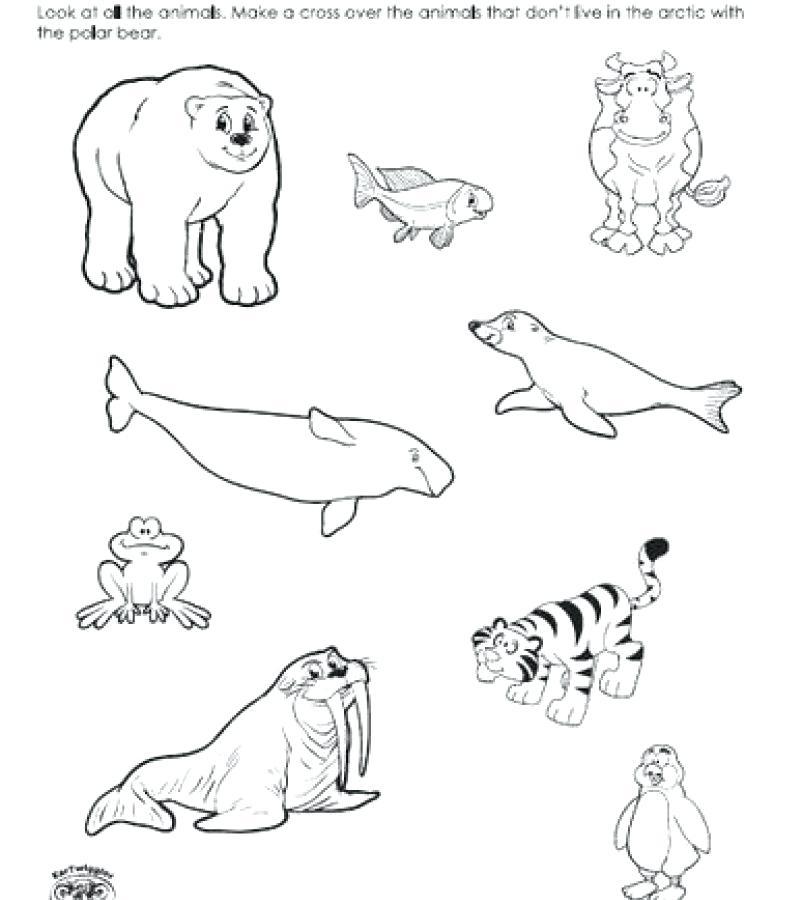 Polar bear printable coloring pages - Hellokids.com | 900x802
