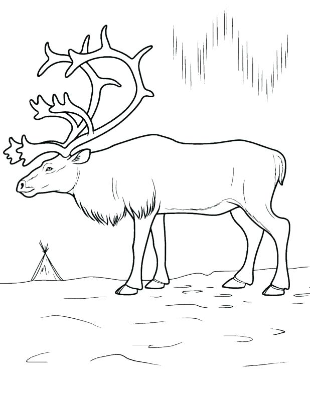 618x824 Arctic Animals Coloring Pages For Preschoolers Free Polar Bear