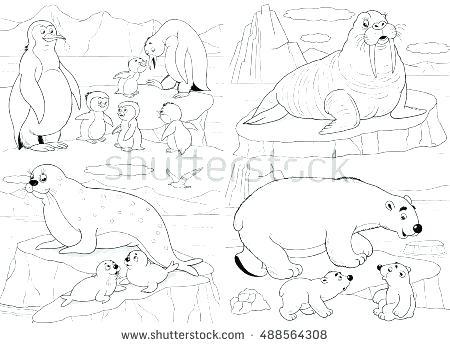 450x347 Arctic Animals Coloring Pages For Preschoolers Polar Fuhrer Von