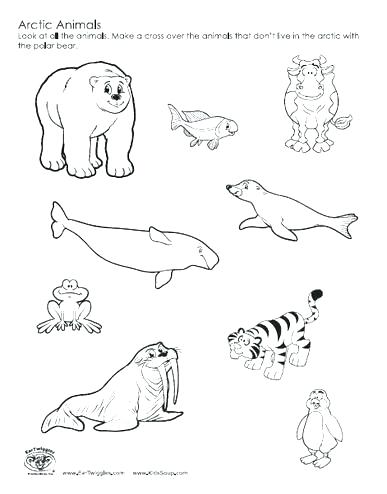 387x494 Animal Color Pages Arctic Coloring Pages Perfect Coloring Arctic