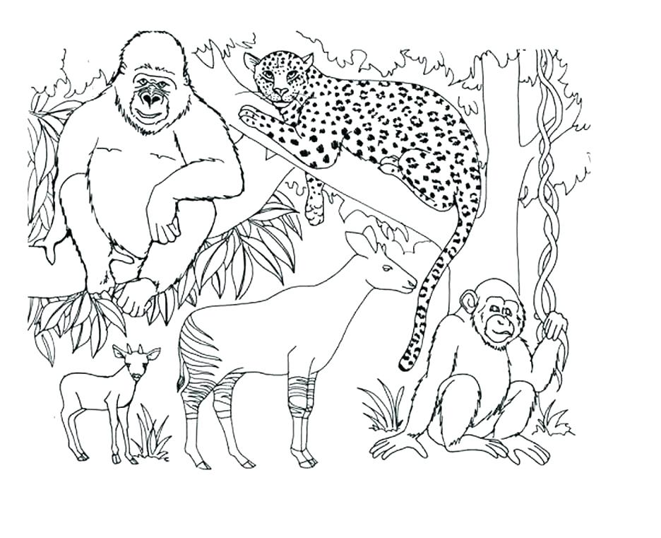 936x761 Arctic Coloring Pages Arctic Animal Coloring Pages Free Animals