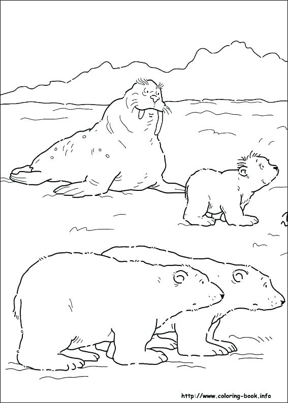 567x794 Arctic Colouring Pages Ice Floe Coloring Pages Free Printable