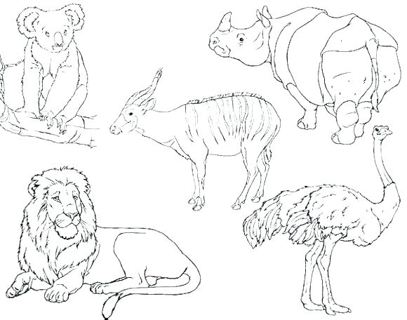 580x456 Zoo Animals Coloring Pages Preschool Coloring Pages Animals Arctic