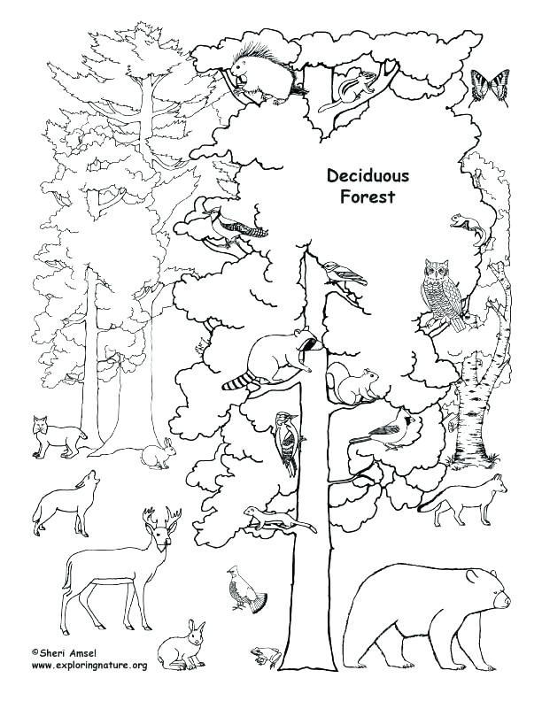 612x792 Polar Animals Colouring Pages