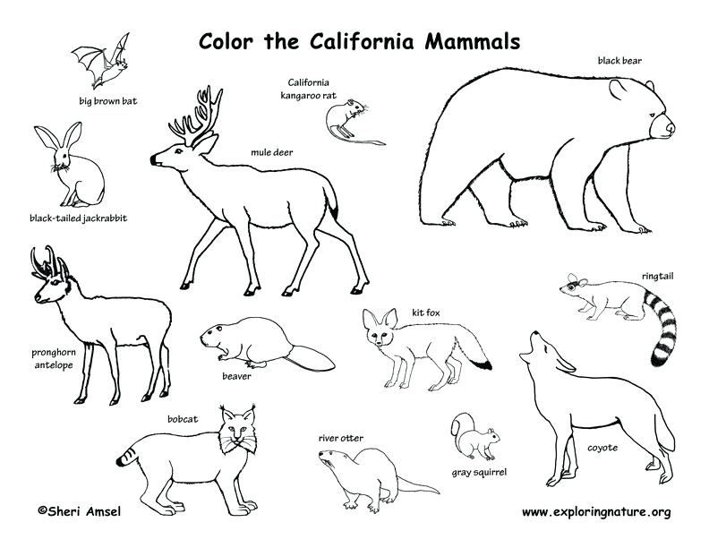 792x612 Tundra Animals Coloring Pages Arctic Animals Coloring Pages