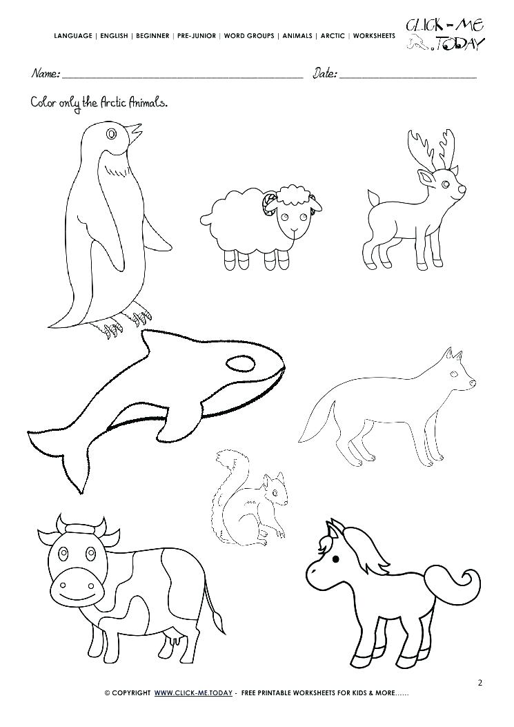 745x1053 Arctic Animal Coloring Pages Polar Animal Coloring Pages Polar