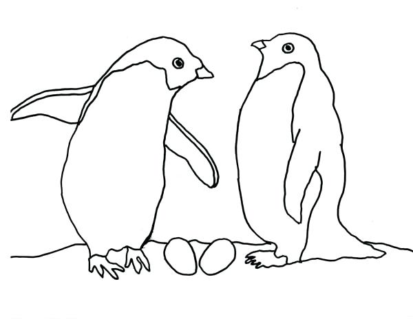 600x464 Arctic Coloring Pages Arctic Animals Coloring Pages