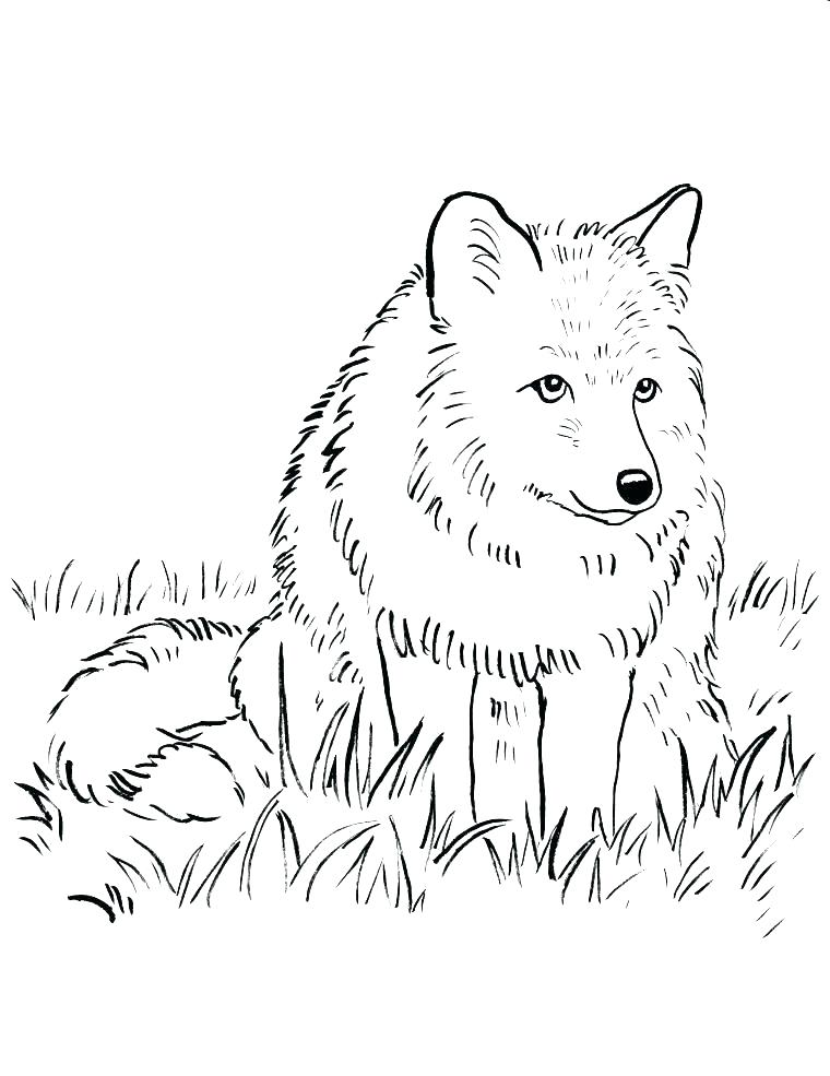 760x985 Arctic Fox Coloring Page Printable Fox Coloring Pages Arctic