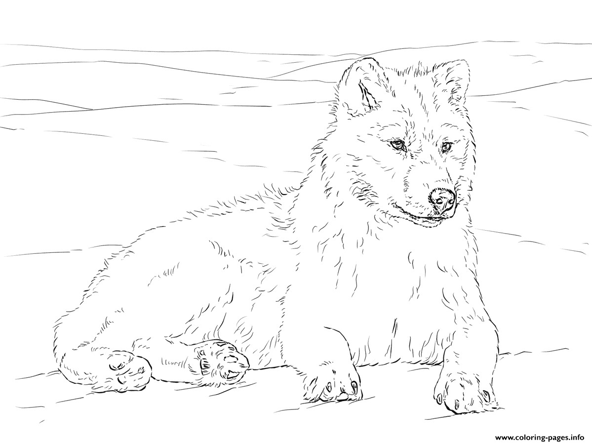 1199x899 Arctic Wolf Coloring Pages Printable Showy Acpra
