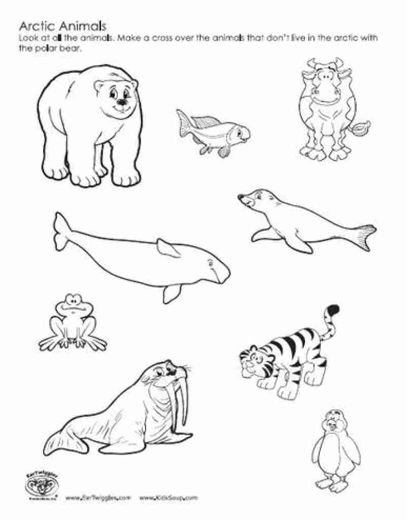 802x1024 Outline Arctic Animals Set For Coloring Page Adults Free Pages