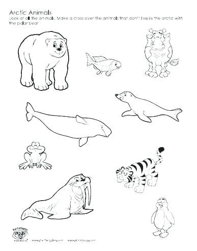 387x494 Arctic Fox Coloring Page