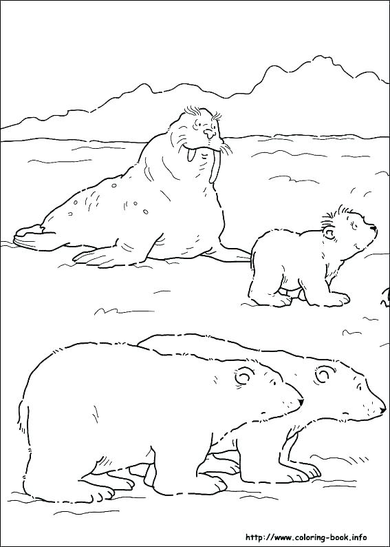 567x794 Arctic Animals Coloring Pages Arctic Animal Coloring Pages Fresh