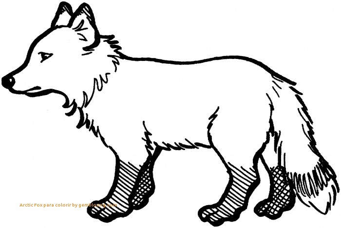 700x468 Fox Coloring Pages Fresh Arctic Fox Para Colorir