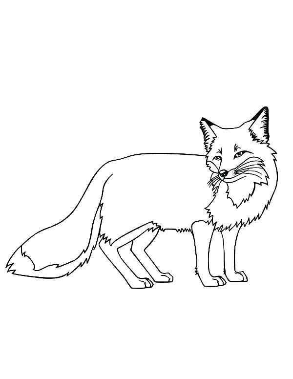 600x776 Fox Coloring Pages Fox Coloring Pages For Preschoolers