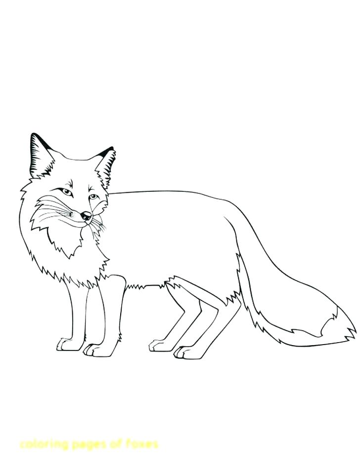 736x952 Red Fox Coloring Pages Arctic Coloring Pages Red Fox Coloring