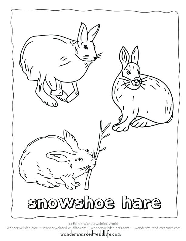 612x792 Arctic Coloring Pages Arctic Animals Coloring Pages Collection