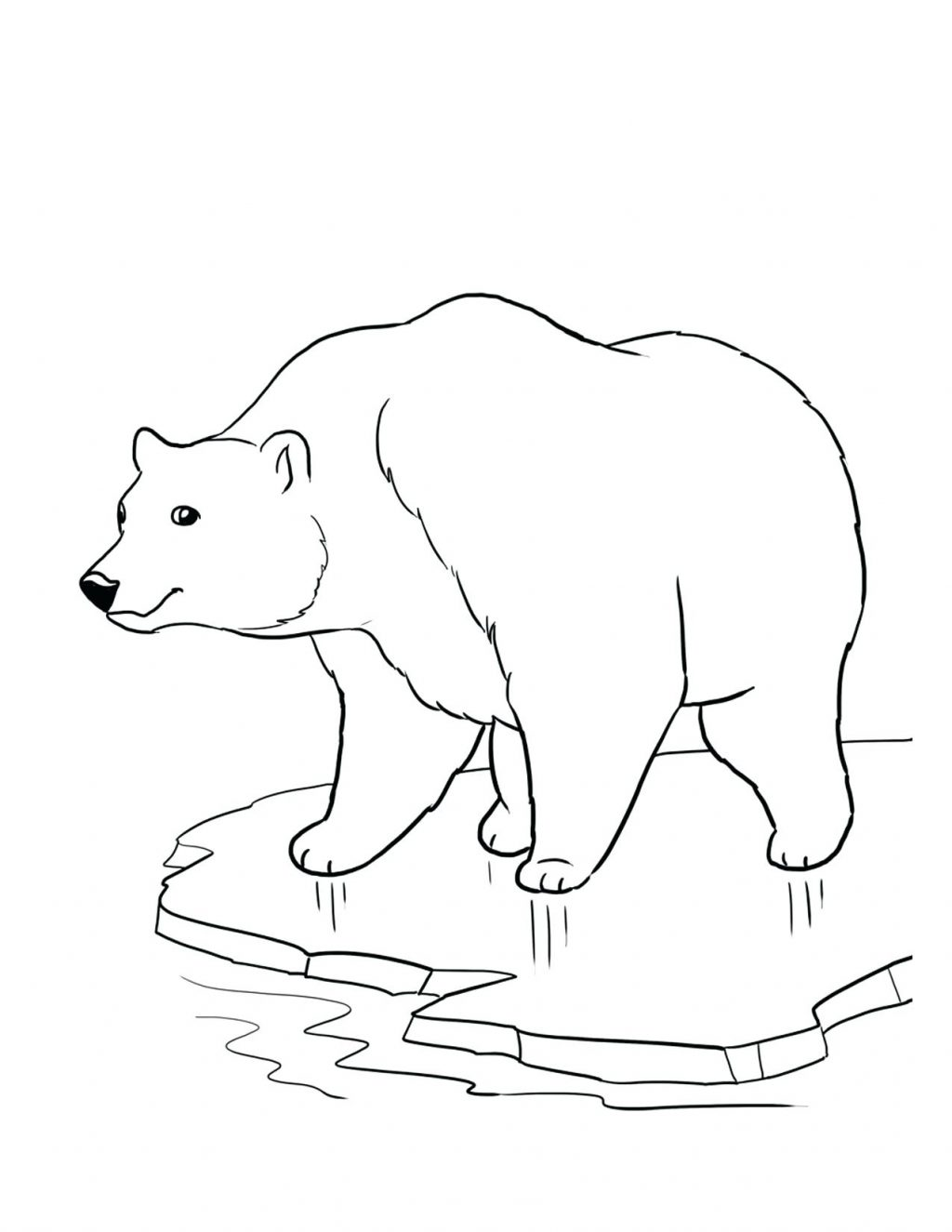 1024x1325 Coloring Page Arctic Fox Coloring Page Good Polar Bear For Print
