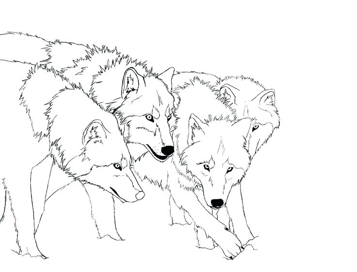 736x562 Arctic Fox Coloring Page Arctic Fox Coloring Page Free Download