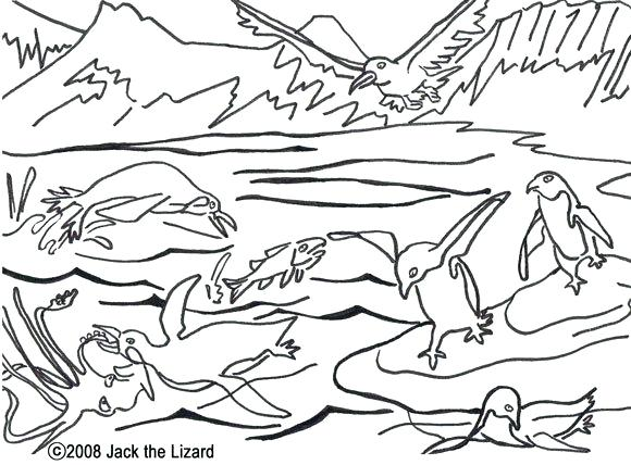 580x428 Arctic Coloring Pages Coloring Pages Of A Wolf Realistic Coloring