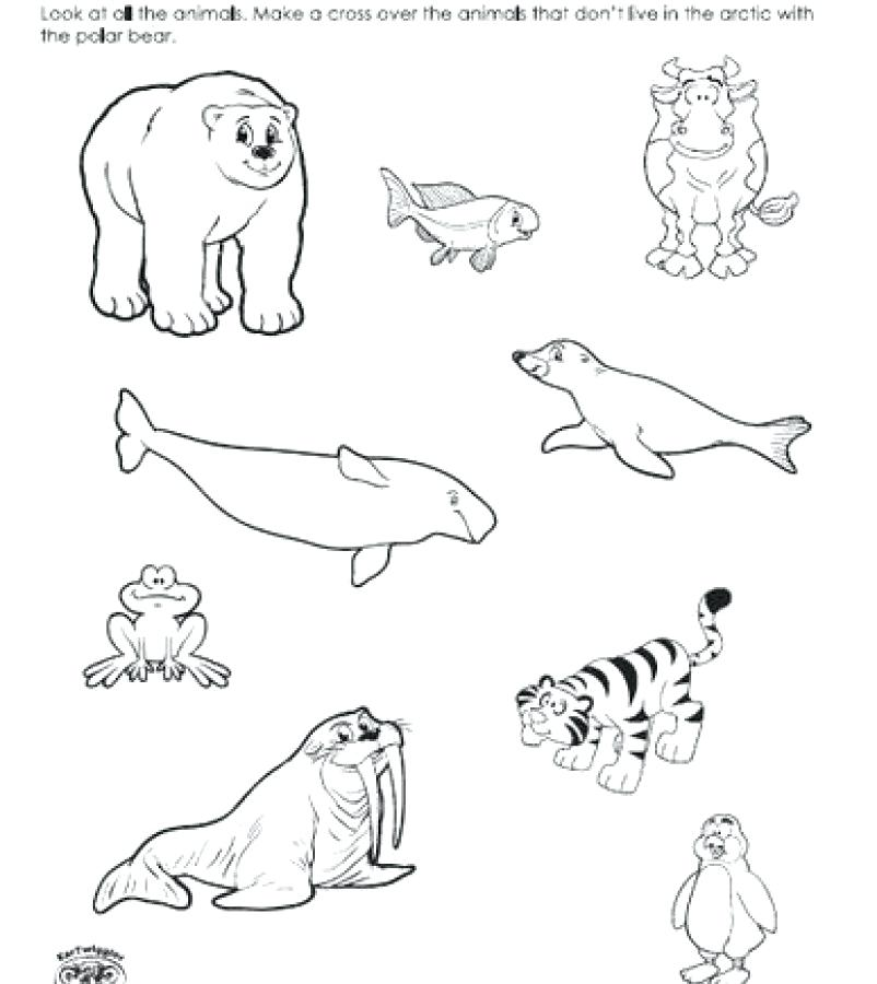 802x900 Arctic Coloring Pages