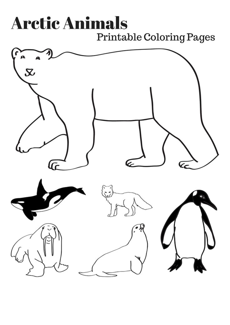 736x1040 Arctic Animals Coloring Pages Printable Free Coloring Pages