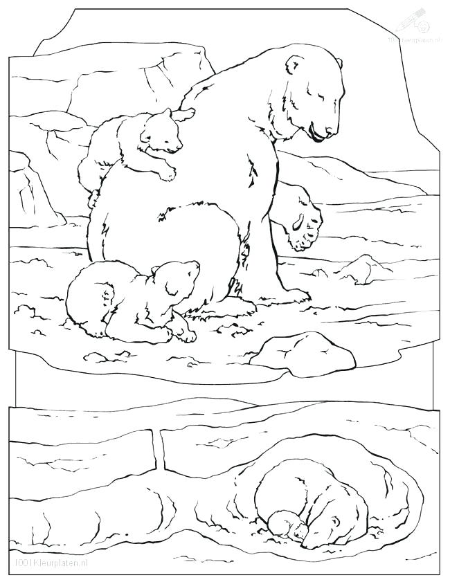 650x841 Coloring Pages For Kids Drawn Polar Bear Arctic Animal Pencil