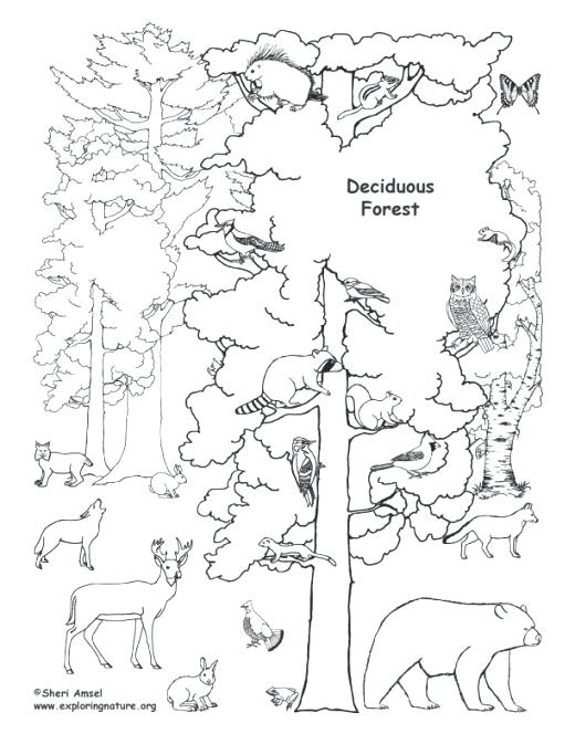 520x673 Rainforest African Coloring Page Free Animal Habitats Coloring