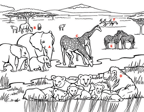 555x432 African Savanna Coloring Pages, Safari Or African Savanna