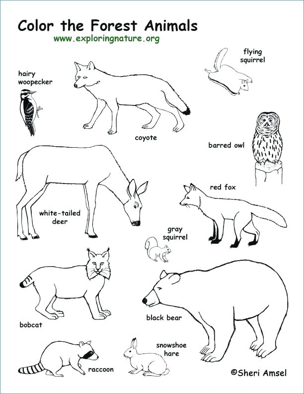 612x792 Winter Animal Coloring Pages