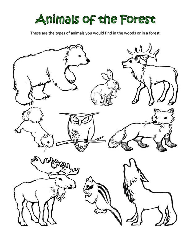 618x800 Animal Classification Coloring Pages