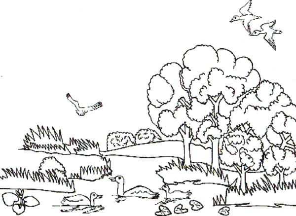 600x438 Animal Habitat Coloring Pages Animal Habitats Landscapes Coloring