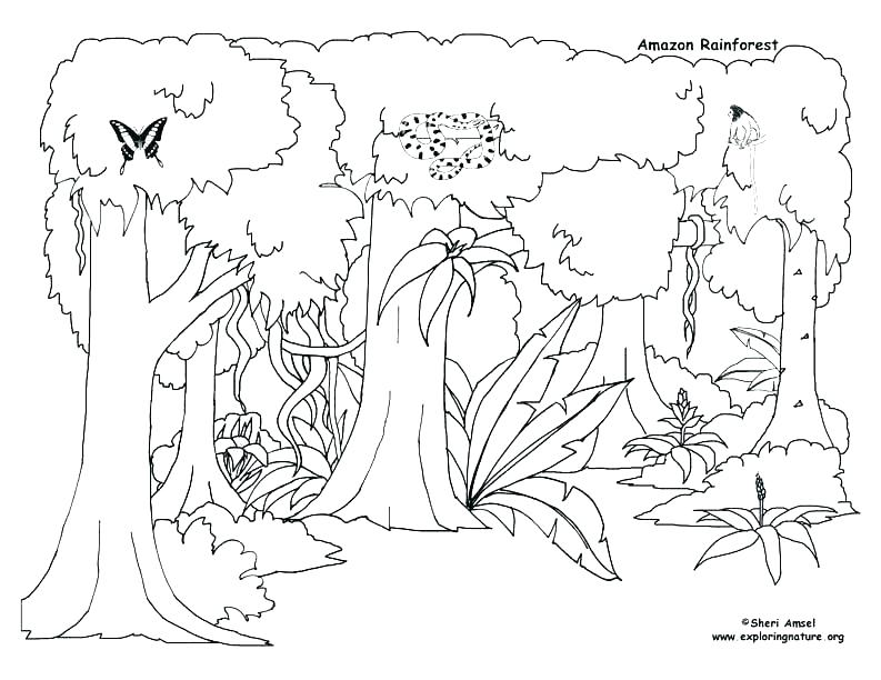 793x612 Animal Habitat Coloring Pages Ocean Animal Coloring Pages Kids