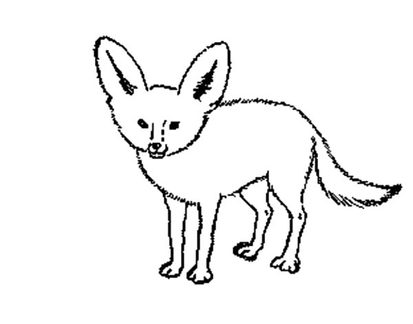 600x471 Arctic Fox Clipart Coloring Page