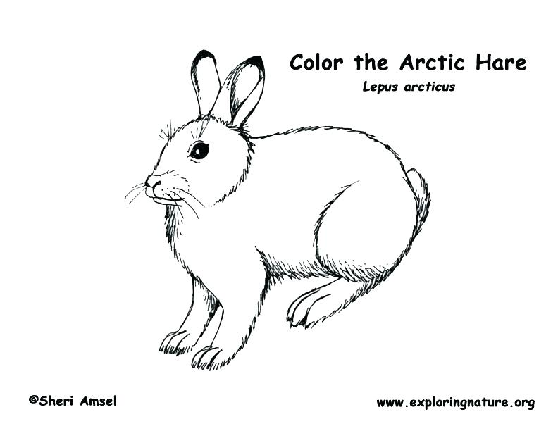 792x612 Arctic Fox Coloring Page Arctic Coloring Pages Animal Jam Arctic
