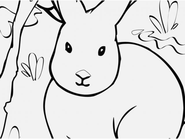 640x480 Coloring Pages Of Animals Photographs Confidential Arctic Animals