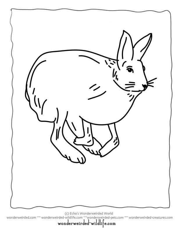 612x792 Snowshoe Hare Clipart