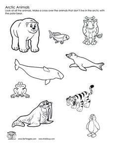 228x295 Arctic Animals Worksheet Hot Resources Arctic