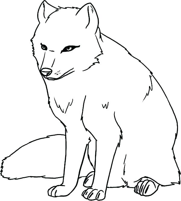 600x667 Arctic Animal Coloring Pages Arctic Animals Coloring Pages Arctic