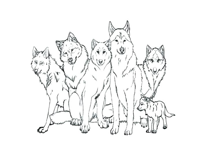 700x525 Coloring Pages Wolf Wolf Pup Coloring Pages Wolves Coloring Page