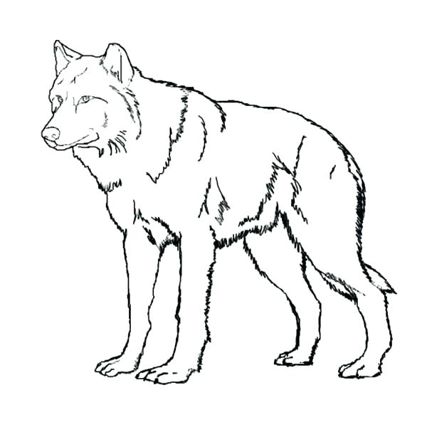 600x600 Realistic Wolf Coloring Pages To Print Wolf Realistic Wolf