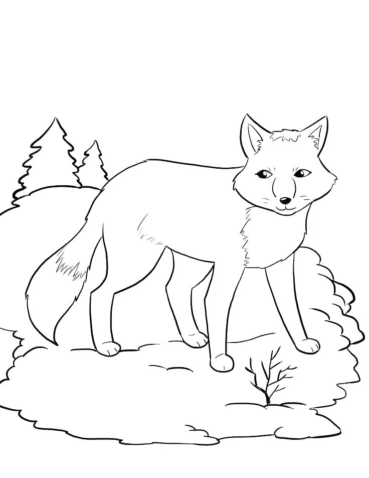 736x952 Animal Jam Coloring Pages Fox Arctic Wolf Coloring Pages Fox