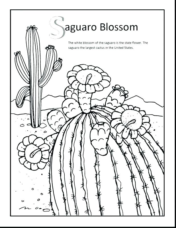 618x800 Arkansas Coloring Pages Coloring Pages State Flower Coloring Page