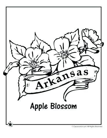 369x478 Arkansas Coloring Pages State Flower Coloring Pages